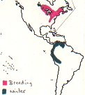 Blackburnian Warbler map