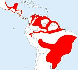Lesser Yellow-headed Vulture map