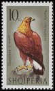 Cl: Golden Eagle (Aquila chrysaetos) <<Shqiponja e malit>>  SG 1084 (1966) 55 [3/6]