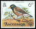 Cl: Common Myna (Acridotheres tristis)(Introduced)  SG 204 (1976) 70