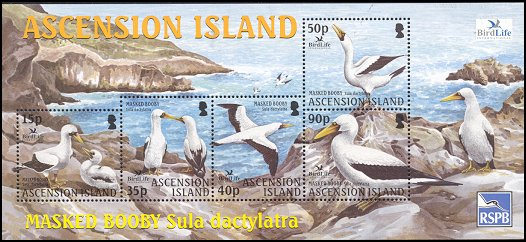 Cl: Masked Booby (Sula dactylatra)(Repeat for this country)  SG 894 (2004) 700 [2/17]