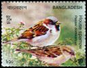 Cl: House Sparrow (Passer domesticus) new (2010)