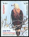Cl: Pallas' Fish-Eagle (Haliaeetus leucoryphus) new (2018)