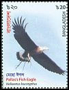 Cl: Pallas' Fish-Eagle (Haliaeetus leucoryphus)(Repeat for this country)  new (2018)