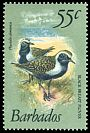 Cl: American Golden-Plover (Pluvialis dominica) <<Black breast Plover>>  SG 633a (1981) 400