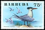 Cl: Royal Tern (Sterna maxima) SG 264 (1976) 20