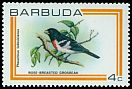Cl: Rose-breasted Grosbeak (Pheucticus ludovicianus)(Out of range)  SG 505 (1980) 75