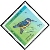 Cl: Common Kingfisher (Alcedo atthis) SG 71 (1993) 40