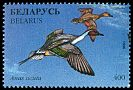 Cl: Northern Pintail (Anas acuta) SG 211 (1996) 60