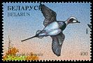 Cl: Long-tailed Duck (Clangula hyemalis) SG 214 (1996) 110