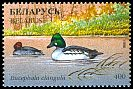 Cl: Common Goldeneye (Bucephala clangula) SG 219 (1996) 60