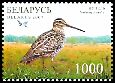 Cl: Great Snipe (Gallinago media) SG 696 (2007) 120