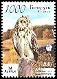 Cl: Short-eared Owl (Asio flammeus) SG 700 (2007) 120