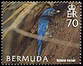 Cl: Eastern Bluebird (Sialia sialis)(Repeat for this country)  SG 963 (2005) 150