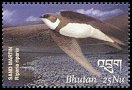 Cl: Bank Swallow (Riparia riparia) SG 1731b2 (2002)