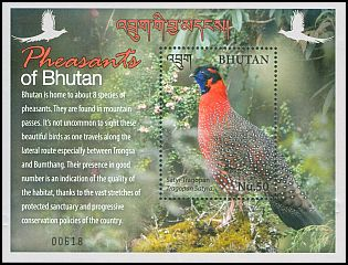 Cl: Satyr Tragopan (Tragopan satyra)(Endemic or near-endemic)  new (2017)