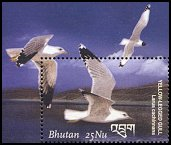 Cl: Great Black-headed Gull (Larus ichthyaetus) SG 1731b1 (2002)