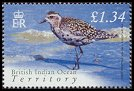 Cl: Pacific Golden-Plover (Pluvialis fulva) SG 305 (2004) 400 [3/2] I have 2 spare [1/24]