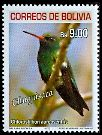 Glittering-bellied Emerald (Chlorostilbon aureoventris)