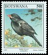 Cl: Red-billed Buffalo-Weaver (Bubalornis niger) <<Leselamitlwa>>  SG 859 (1997) 80