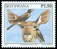 Cl: Yellow-billed Oxpecker (Buphagus africanus) <<Kala>>  SG 865 (1997) 140