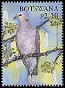 Cl: Red-eyed Dove (Streptopelia semitorquata) SG 1046 (2005) 85 [5/14]