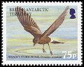 Cl: Wilson's Storm-Petrel (Oceanites oceanicus)(Repeat for this country)  SG 397 (2005) 400