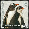 Cl: Gentoo Penguin (Pygoscelis papua)(Repeat for this country) (I do not have this stamp)  SG 559 (2011)