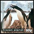 Cl: Adelie Penguin (Pygoscelis adeliae)(Repeat for this country) (I do not have this stamp)  SG 561 (2011)