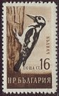 Cl: Great Spotted Woodpecker (Dendrocopos major) SG 1142 (1959) 80