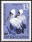 Cl: Dalmatian Pelican (Pelecanus crispus)(Repeat for this country)  SG 3184 (1984) 95