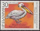 Cl: Great White Pelican (Pelecanus onocrotalus) SG 3522 (1988) 65
