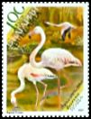 Cl: Greater Flamingo (Phoenicopterus roseus) SG 4650d (2007) 550
