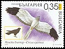 Cl: Northern Harrier (Circus cyaneus) SG 4583 (2006) 85