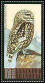 Cl: Little Owl (Athene noctua) SG 4735 (2009) 140