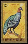 Cl: Congo Peacock (Afropavo congensis)(Out of range)  SG 144 (1965) 70 [3/18]