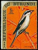 Cl: Northern Shrike (Lanius excubitor)(Out of range)  SG 560 (1970) 150