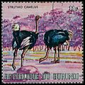 Cl: Ostrich (Struthio camelus)(Out of range)  SG 635 (1971) 30