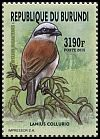 Cl: Red-backed Shrike (Lanius collurio) new (2016)