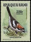 Cl: Woodchat Shrike (Lanius senator)(Repeat for this country)  new (2016)