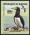 Cl: Brown Booby (Sula leucogaster)(Out of range)  new (2016)