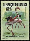Cl: Greater Flamingo (Phoenicopterus roseus)(Repeat for this country)  new (2016)