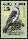 Cl: Black-shouldered Kite (Elanus caeruleus)(Repeat for this country)  new (2016)