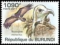 Cl: Hooded Vulture (Necrosyrtes monachus) new (2011)  [7/39]