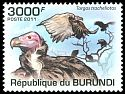 Cl: Lappet-faced Vulture (Torgos tracheliotus) new (2011)  [7/39]
