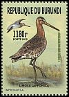 Cl: Bar-tailed Godwit (Limosa lapponica) new (2016)