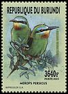 Cl: Blue-cheeked Bee-eater (Merops persicus) new (2016)