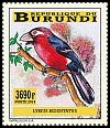 Cl: Double-toothed Barbet (Lybius bidentatus) new (2014)