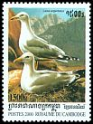Cl: Yellow-legged Gull (Larus michahellis)(Out of range)  SG 2022 (2000) 130