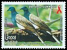 Cl: Spotted Dove (Streptopelia chinensis) new (2011)  [7/29]